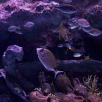 aquarium_10_20130815_2016584089