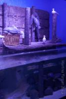 aquarium_11_20130815_1034194932
