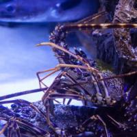 aquarium_12_20130815_1676948143
