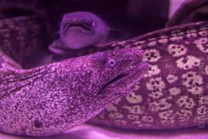 aquarium_13_20130815_1717725654