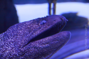 aquarium_14_20130815_1082228907