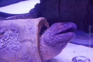 aquarium_15_20130815_1265315263