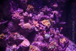 aquarium_16_20130815_1935515467