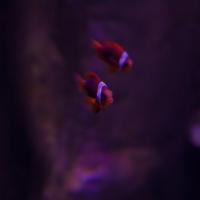 aquarium_18_20130815_1443565642