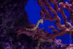 aquarium_19_20130815_1377290419