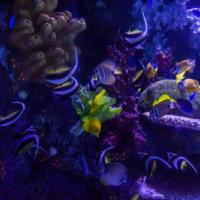 aquarium_1_20130815_1279821060