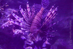 aquarium_23_20130815_2037367316