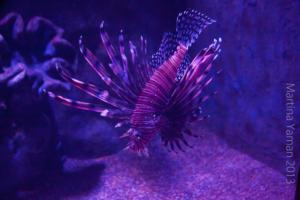 aquarium_24_20130815_1018181937