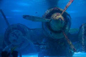 aquarium_25_20130815_1384159386