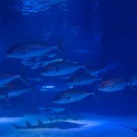 aquarium_26_20130815_1837335801