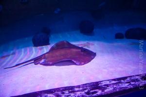 aquarium_27_20130815_1256783343