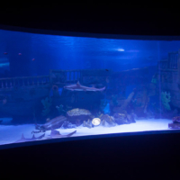 aquarium_28_20130815_1941058728