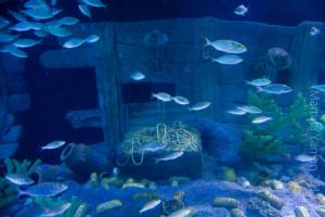 aquarium_29_20130815_1368573482