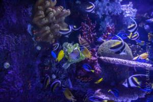 aquarium_2_20130815_1993116400