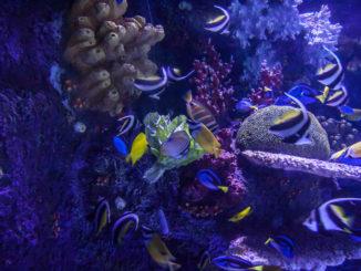 aquarium 2 20130815 1993116400