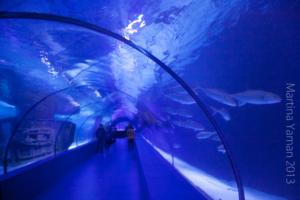 aquarium_30_20130815_1708893967