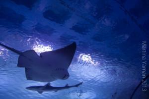 aquarium_31_20130815_1064764776