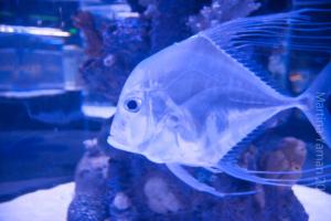 aquarium_32_20130815_1279606879
