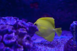 aquarium_33_20130815_1485416908