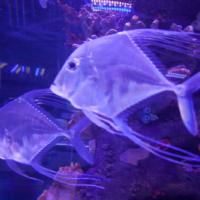 aquarium_34_20130815_1576417664