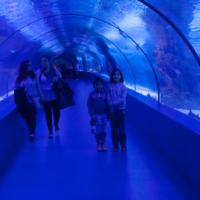 aquarium_35_20130815_1812093061