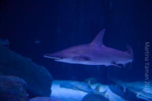 aquarium_38_20130815_1671016605