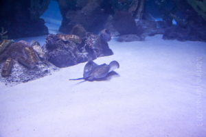 aquarium_39_20130815_1282399533