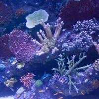 aquarium_3_20130815_1876064668
