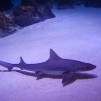 aquarium_40_20130815_1625651419