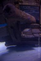 aquarium_41_20130815_1121234234