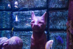 aquarium_5_20130815_1113092790