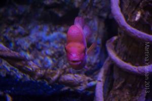 aquarium_6_20130815_1808721348