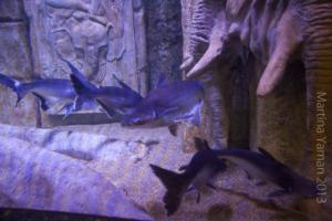 aquarium_7_20130815_1370885345