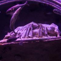aquarium_8_20130815_1865477540