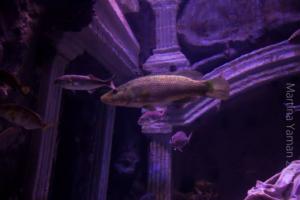 aquarium_9_20130815_1513063916